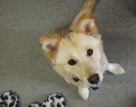 犬の便秘の原因・解消法