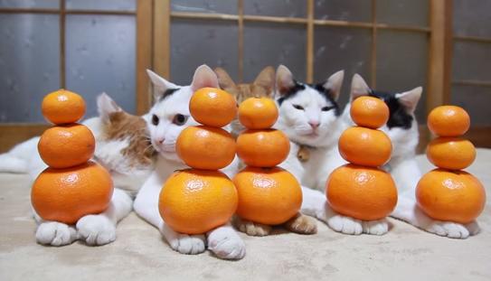 【動画】話題の猫ちゃん動画集めました♪