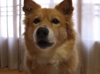 【動画】しゃべるワンコたち
