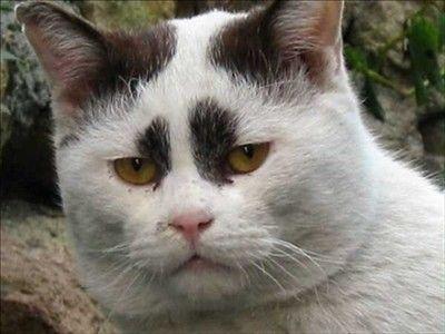 画像】ネコ好き必見!様々な表情を見せるネコたち