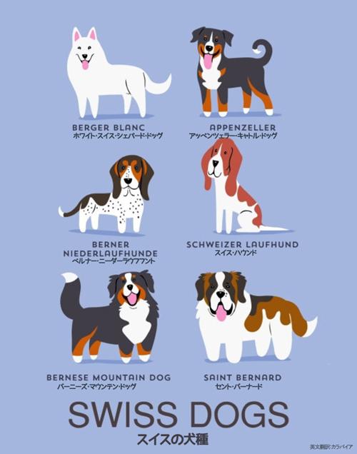 スイスの犬たち