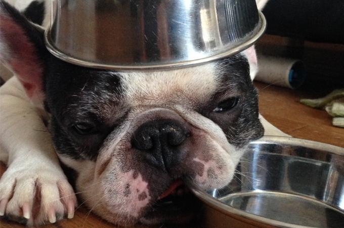 子犬の食事はどうするの?肥満や病気を予防するための食事の与え方