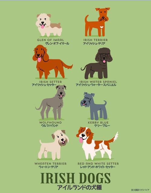 アイルランドの犬たち