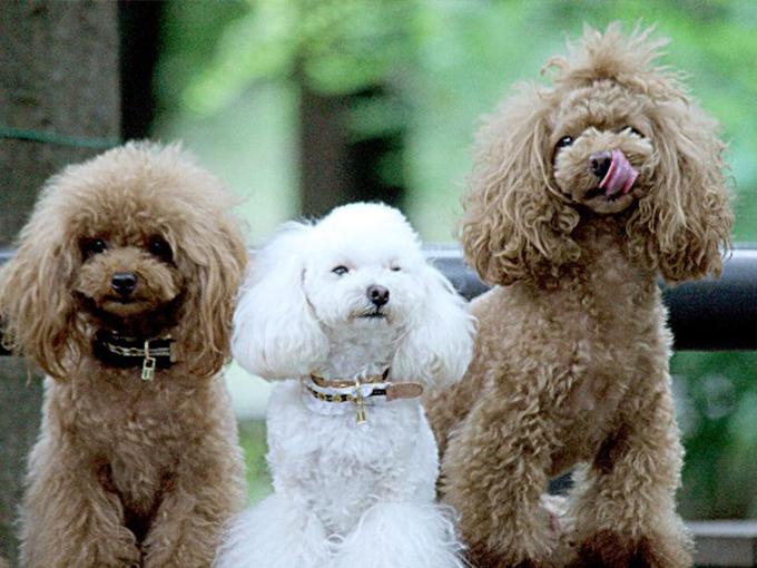 犬を飼うまえに抑えておきたい5つのポイント
