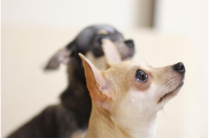 しつけの基本!子犬の悪いクセを予防するために必要な基礎知識