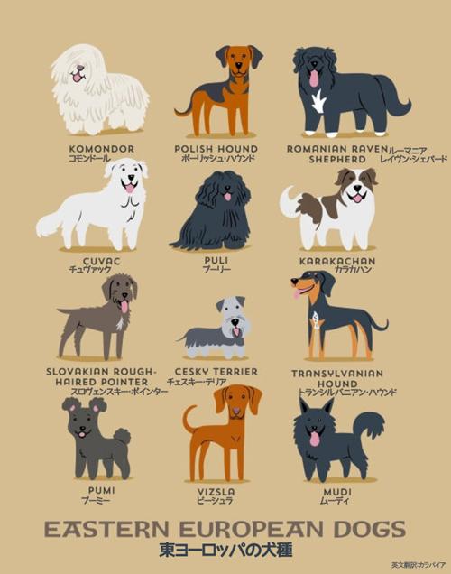 東ヨーロッパの犬たち