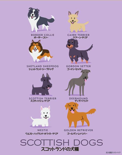 スコットランドの犬たち
