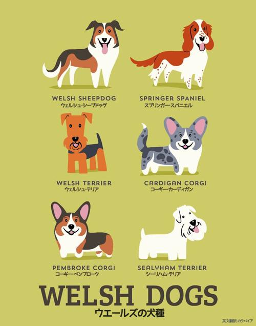 ウエールズの犬たち