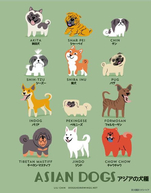 アジアの犬たち