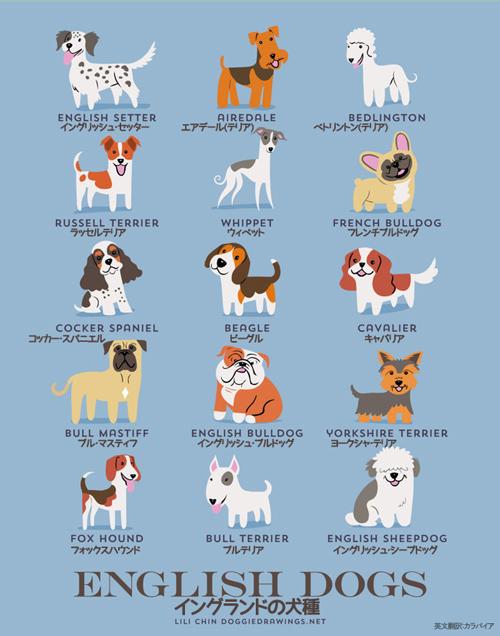 イングランドの犬たち