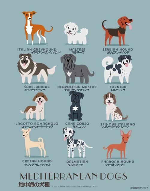 地中海の犬たち
