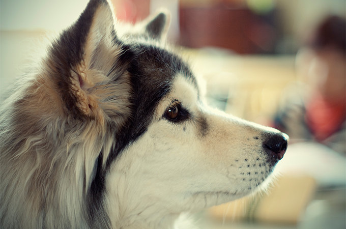 犬を飼うときに必要な届け出と血統書についてのまとめ