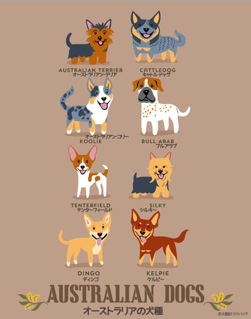 オーストラリアの犬たち