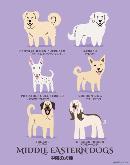 中東の犬たち