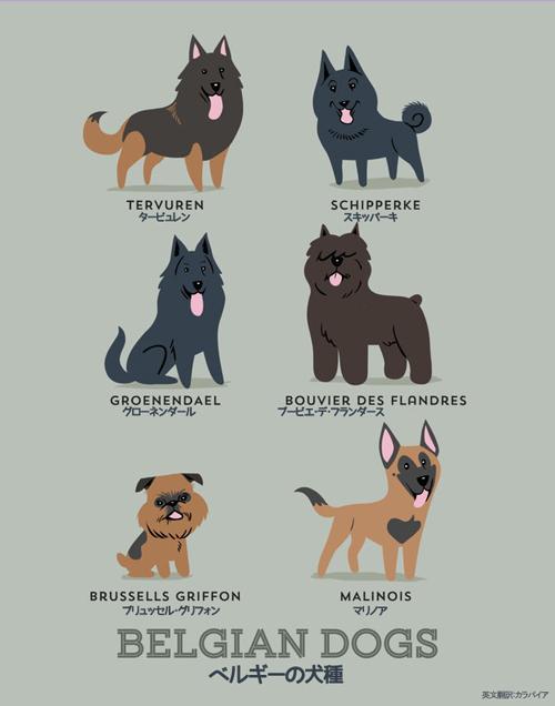 ベルギーの犬たち