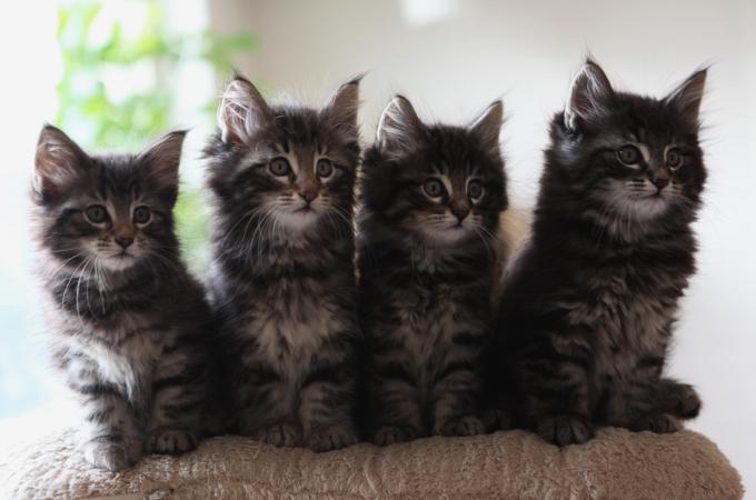 愛猫のストレスを減らす方法とストレスに強くするためのコツ