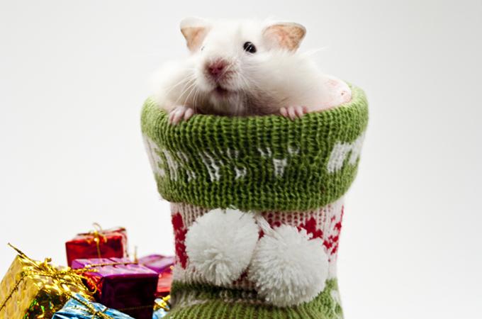 冬場のハムスターの飼育で特に注意したい冬眠のポイント、見分け方