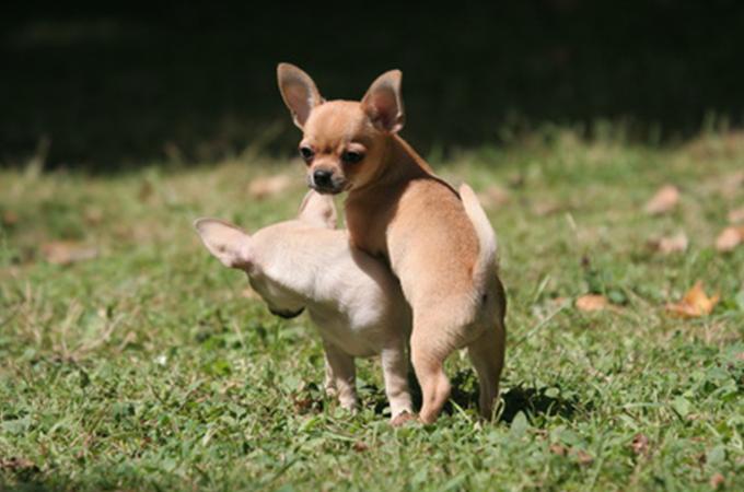 一目でわかる愛犬がいばっているときに見せる3つのしぐさ・行動