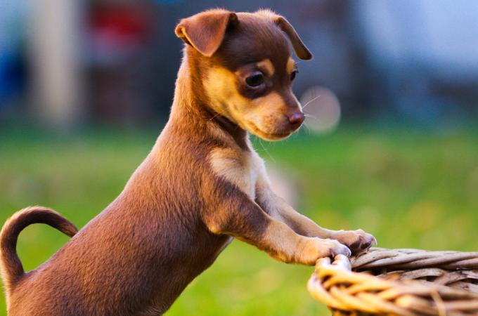 愛犬が長生きするために飼い主さんが愛犬に教えないといけないしつけに関する4つの秘訣