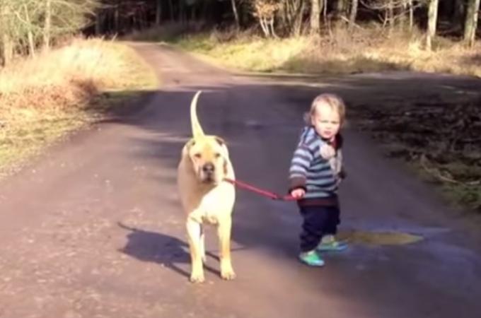 信頼関係が完全に出来上がっている赤ちゃんと犬の最強コンビ動画
