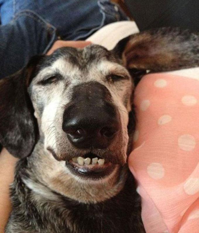 寝顔・寝相が悪い犬1