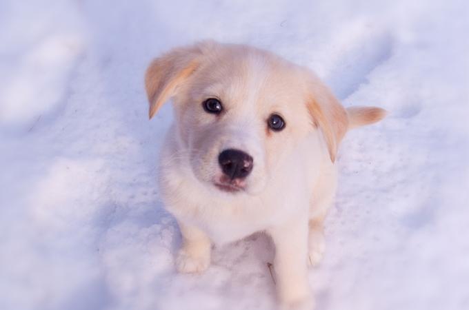 愛犬が快適に過ごすために知っておきたい乾燥から守る冬場の3つのケア法