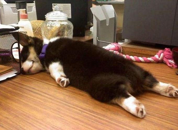 寝顔・寝相が悪い犬3