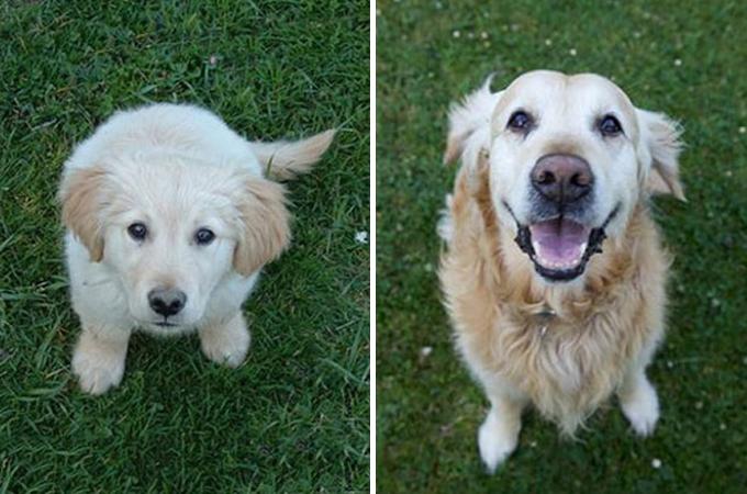 愛犬の成長が一目でわかる素敵な画像14選