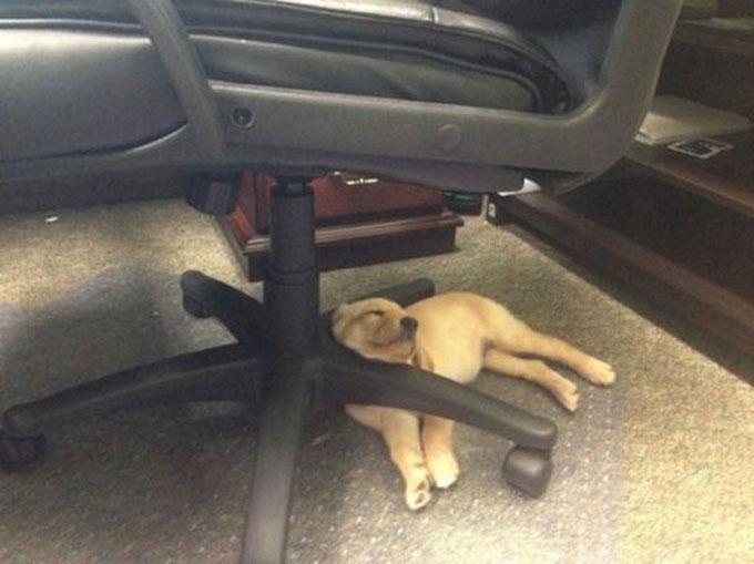 寝顔・寝相が悪い犬5