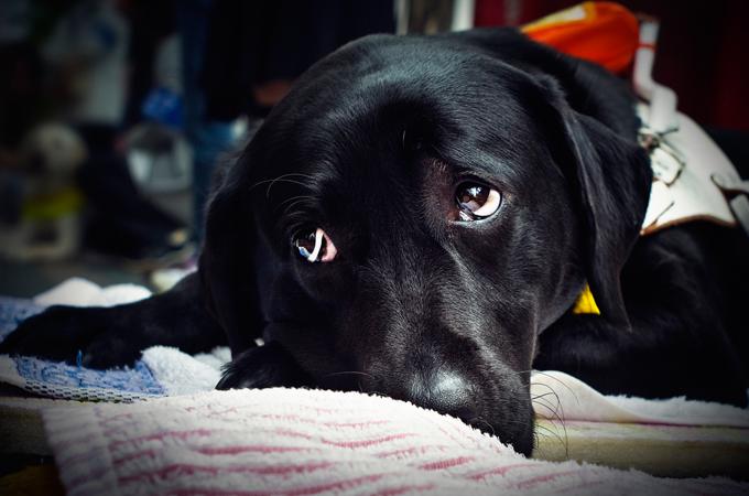犬がストレスを感じたときの3大しぐさはコレ!