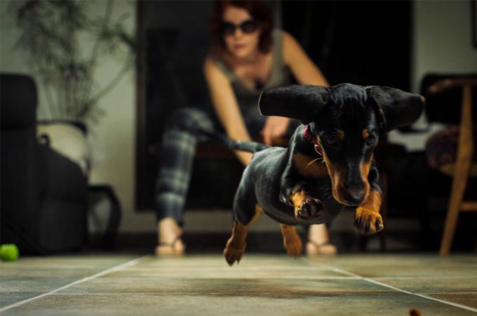 すぐにでも実践できる愛犬にもっと好かれるコツ3ヶ条教えます!