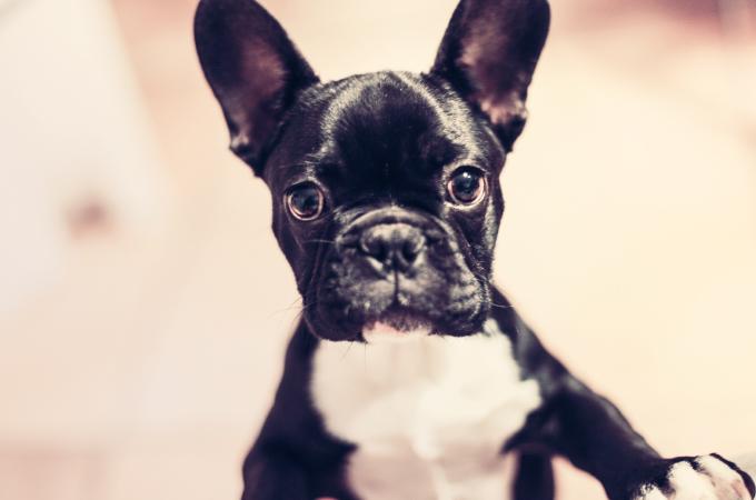 犬種のルーツにあった犬の育て方【モデル編】