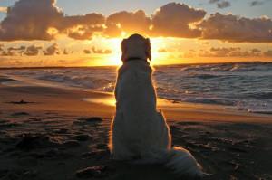 ウンチの臭いがきつい犬は、寿命が短い傾向にあるって本当?