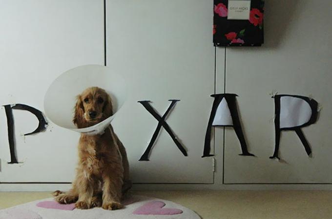 変わったエリザベスカラーを付けられて何とも言えない表情の犬猫画像13選