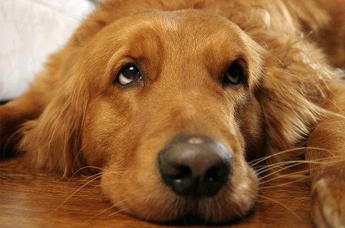 こんなことをすると、愛犬に嫌われたり、関係が崩れるキッカケになってしまうNG集!