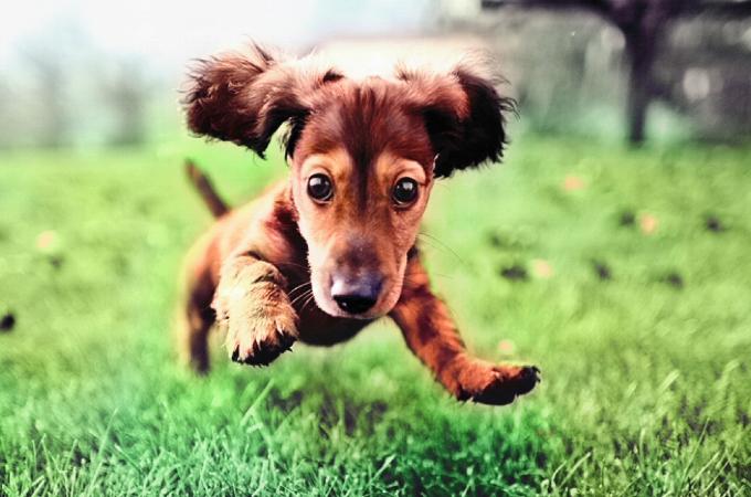 犬種のルーツにあった犬の育て方【ハンター編】