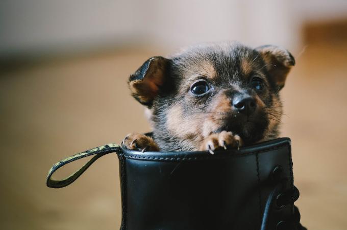 犬種のルーツにあった犬の育て方【子役編】