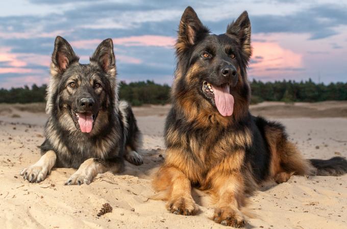 犬種のルーツにあった犬の育て方【牧場スタッフ編】