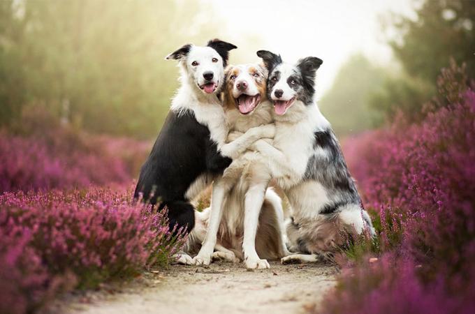 愛犬に長生きしてほしいからずっといっしょにいるための5つの生活習慣