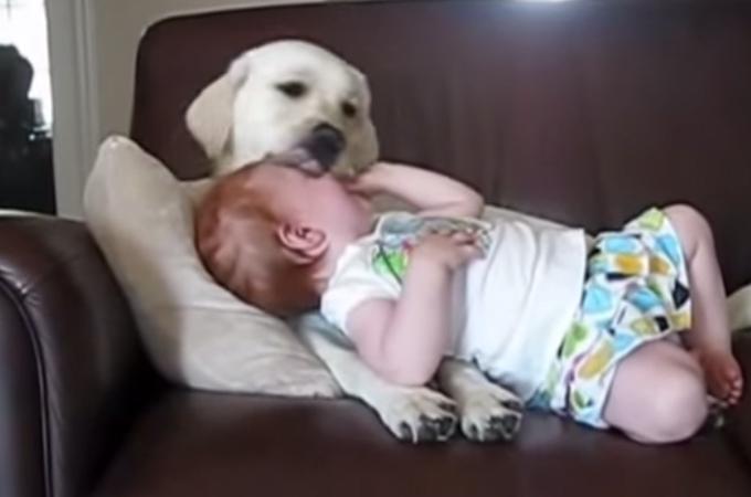 犬と人間はやっぱり仲良し!かわいい犬が赤ちゃんの子守りをするまとめ動画