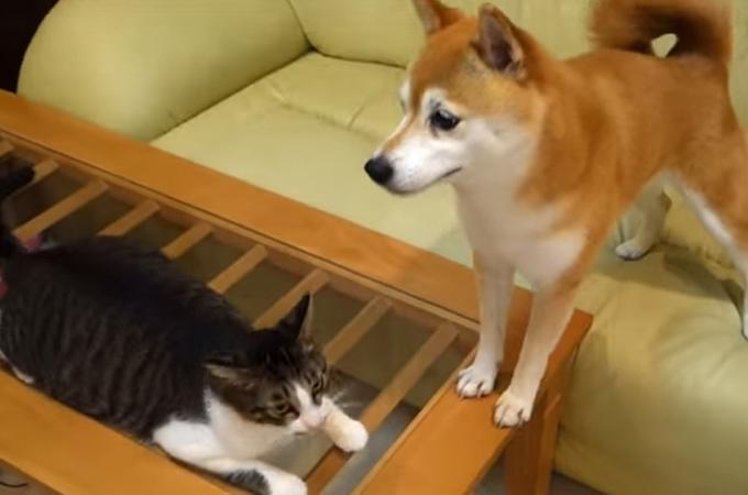 みごとなまでのボケとツッコミを見せてくれる犬と猫の漫才芸動画