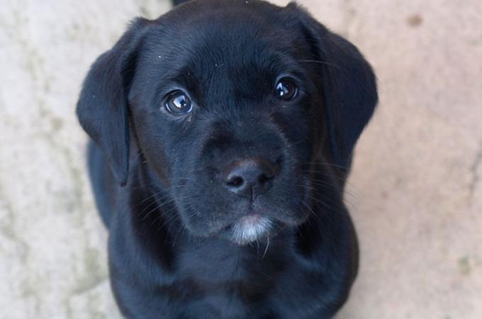 人の感じる痛みを理解している!犬は泣いている人を見ると放っておけない感動のストーリー