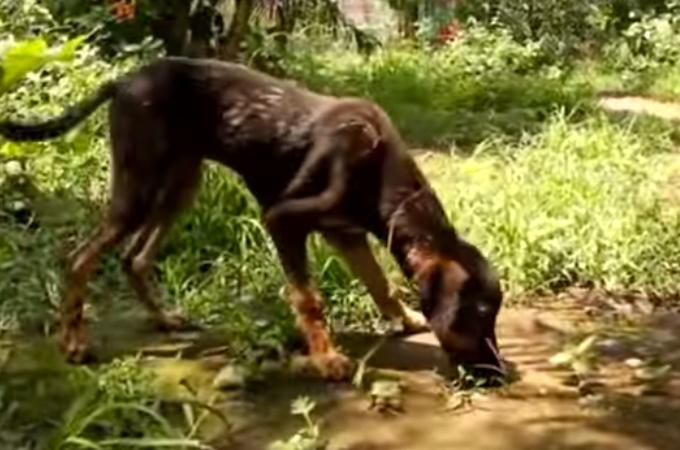 タールの中にはまり自力で抜け出すことができなくなってしまった犬の大救出劇