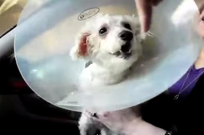 一匹でも多くの犬を救いたい!盲目犬に起きた奇跡の感動ストーリー動画