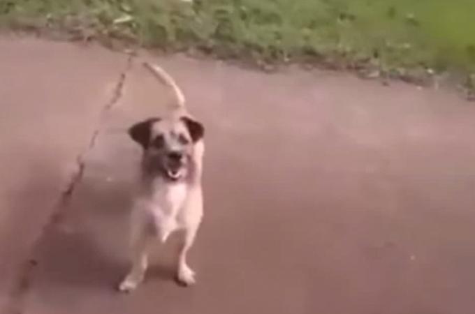 救急車で運ばれる飼い主さんとそれを追いかける犬!そのとき救急隊員がとった感動の対応