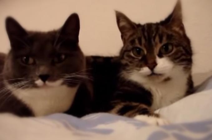 字幕があったら思わず会話に参加したくなる2匹で会話する可愛い猫の癒し動画