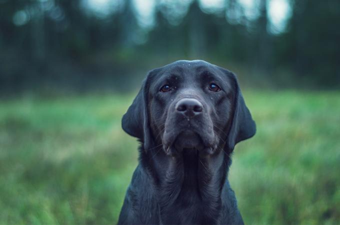 自分の命とひきかえに愛する飼い主さんを守りぬいたある1匹の補助犬の感動のお話