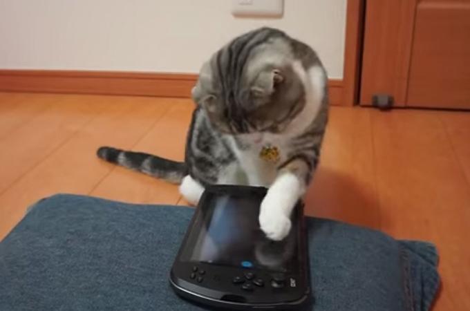 可愛い肉球でポチッとな!タッチパネルもお手の物!自撮り猫の癒し動画