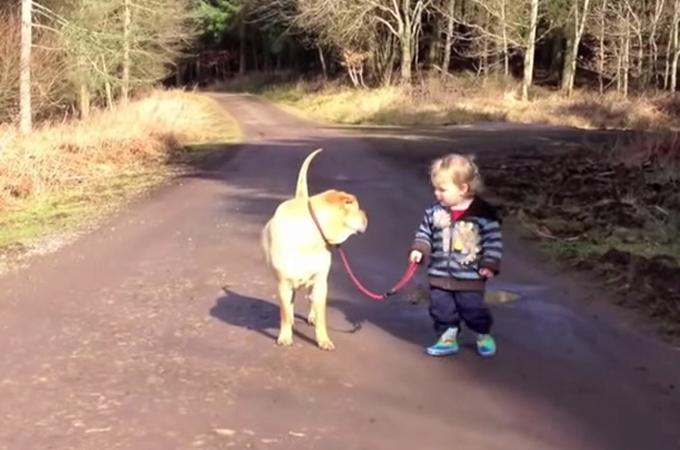 犬と人はベストフレンド!目を疑ってしまう犬と男の子の仲良しお散歩動画