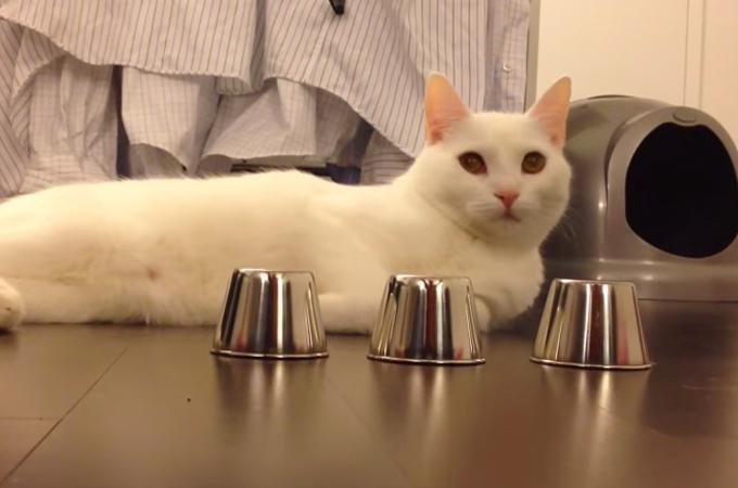 シャッフルしたカップに入ったボールをスバリ当てる天才猫!実は悲しい過去が…